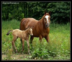 an adult name: SiSi ...   Sex: mare ...   Age: 5 years ...   Breed: Slovak Warmblood ...     Foal: KiKi ...   Sex: filly ...   Age: 6 months ...
