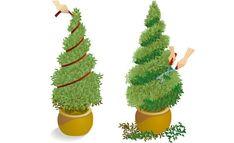 Cut boxwood - All About Gardens Outdoor Topiary, Topiary Garden, Topiary Trees, Garden Shrubs, Shade Garden, Garden Art, Stone Landscaping, Backyard Landscaping, Corner Garden