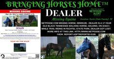 PRESS RELEASE - HORSE LOST IN WEKIVA RIVER PRESERVE STATE PARK - FLORIDA