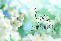 Good morning image with white flowers and a butterfly. Good Morning Babe Quotes, Latest Good Morning Images, Good Morning Beautiful Pictures, Beautiful Morning Messages, Good Morning Images Flowers, Good Morning Inspiration, Good Morning Cards, Good Morning Picture, Good Morning Greetings