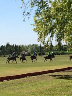Play Polo Every Day #argentinapoloday #polo #poloholidays