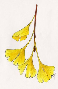 Autumn Ginkgo by Eurwentala Nouveau Tattoo, Leaf Drawing, Art Drawings For Kids, Sketch Inspiration, Arte Floral, Leaf Art, Botanical Illustration, Flower Art, Watercolor Paintings
