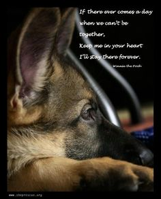 Wicked Training Your German Shepherd Dog Ideas. Mind Blowing Training Your German Shepherd Dog Ideas. I Love Dogs, Puppy Love, Cute Dogs, Animals Beautiful, Cute Animals, Pet Sitter, Schaefer, German Shepherd Puppies, Dog Quotes