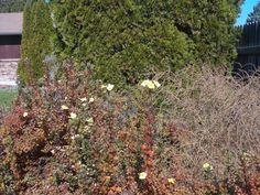 PT 596 OCT 13 FLOWERS IN NAMPA IDAHO.