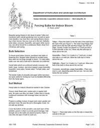Forcing Bulbs for Indoor Bloom - Free 4 Page Purdue University PDF file.