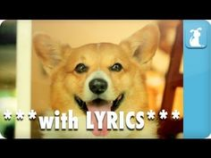 "Corgi Rae Jepsen takes on Carly's hit ""Call Me Maybe"" with Lyrics!  Subscribe to The Pet Collective: http://full.sc/HbM62v  Download FREE mp3 of the song:  http://www.facebook.com/thepetcollective/app_220150904689418    Facebook: http://www.facebook.com/thepetcollective  Twitter: https://twitter.com/petcollectiveTV  Pinterest: http://pinterest.com/pet..."