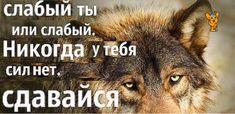 Russian Humor, Reasons To Live, Naan, Memes, Animals, Life, Bullshit, Wallpaper, Humor