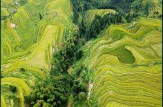 Vue aérienne des rizières dans le village de Jiache, au sud-ouest de Guizhou, en Chine / Photo AFP