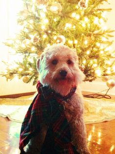 Merry Christmas Norman