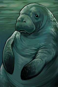 Manatee by Red Wombat Studio