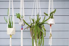 Image result for macrame plant hanger