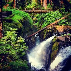 At Sol Duc Hot Springs Resort, the famous Lover's Lane Loop (six miles round-trip) is accessible from the back of the resort. This hike leads you into the old growth forest, along the Sol Duc River, crossing at Sol Duc Falls in northwest Washington. This is one of the popular hiking trails in the Sol Duc Area.