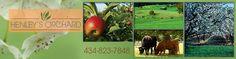 Henley's Orchard - Crozet, VA