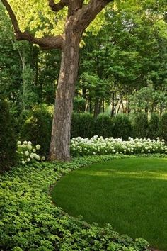 103 beautiful evergreen grasses landscaping ideas page 44 of 104 Landscaping Supplies, Landscaping Tips, Front Yard Landscaping, Wooded Backyard Landscape, Landscaping Software, Landscaping Borders, Minnesota Landscaping, Shade Landscaping, Natural Landscaping