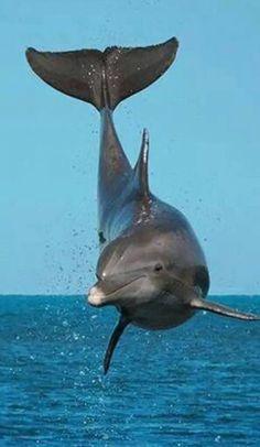 Blije dolfijn.