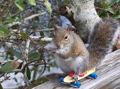 Squirrel shredding the gnar.