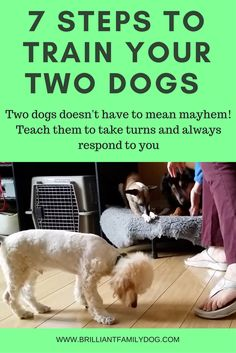 How to manage a multi-dog household with fun and enjoyment!
