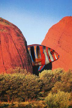Harlequin Tuskfish, John Turck Collage