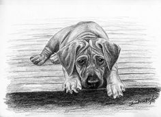 Rhodesian Ridgeback Puppy Dog, Pup, Limited Edition, Signed