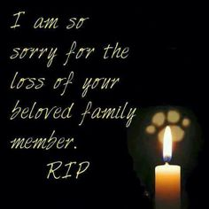 Sweet Pam, so sorry you have lost your precious beloved furbaby!! Love Noni. xoxo