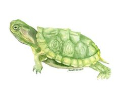 Turtle Watercolor Painting 7 x 5 Giclee Print by SusanWindsor