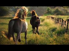 Image about nature in Horses by Samantha on We Heart It All The Pretty Horses, Beautiful Horses, Animals Beautiful, Beautiful Dream, Farm Animals, Animals And Pets, Cute Animals, Horse Background, Horse Wallpaper