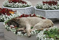 What do you mean it's not a bed? It's called a flower bed ~ LOL ~