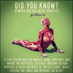 Fitness & Exercise tips for people with Autoimmune Diseases Back Exercises, Stretching Exercises, Poster Sport, Daily Stretches, Upward Dog, Downward Dog, Sport Nutrition, Health And Fitness Articles, Yoga Moves