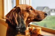 Hyper attachement chez le chien : symptômes et solutions