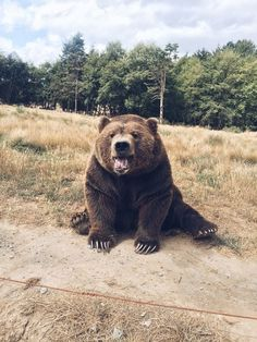 These creatures are beautiful but stay safe and DONT try to pet them. They're wild animals guys not domestic pets. Cute Little Animals, Cute Funny Animals, Cute Dogs, Cute Creatures, Beautiful Creatures, Animals Beautiful, Nature Animals, Animals And Pets, Le Zoo