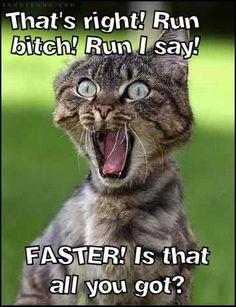 Thats right ! Run bitch
