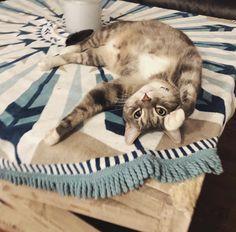 Round Towels, West Coast, Cats, Animals, Gatos, Animales, Animaux, Animal, Cat
