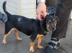 ACE Animal Care España - Mama Belle Helene and her puppies are safe but they have a long way to go....