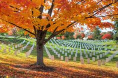 The modern-day arboretum that plays home to the Arlington National Cemetery, established in 1864, wa... - Photo: Clarence Holmes Photography/Alamy