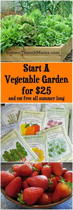 For $25, you can build a raised bed vegetable garden WITH plants and grow enough food to make back your money in no time.
