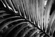 Leaves Photo by Caroline Holdstock -- National Geographic Your Shot