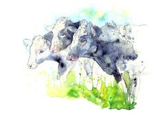 Amy Holliday Illustration : Dairy Cattle Studies for my upcoming Milk Packaging Illustrations