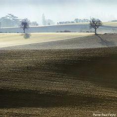 Deux arbres | Flickr - Photo Sharing!