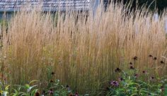 Use grasses as dynamic screens. 'Karl Foerster' reed grass creates a living screen that changes in form and color throughout the year.