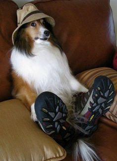 the stuff ppl put their dogs through... soooo cute :p