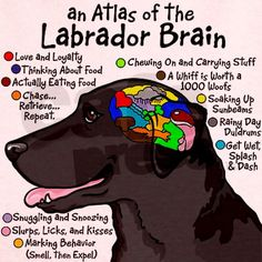 """""""an Atlas of the Labrador Brain""""  ----  [Designed by Illustrator Terry Pond]'h4d'121019"""