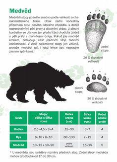 Poznáte stopy zvířat? - Dřevěné Vánoce Animal Tracks, Biology, Activities For Kids, Survival, Nature, Animals, Tatoo, Etchings, Naturaleza