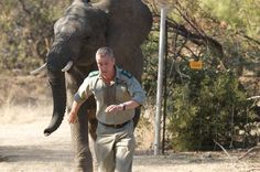 Jumbo role: Danny (Stephen Tompkinson) being chased by a troubled elephant Wild Hearts, Titanic, Wildlife, Elephant, It Cast, Celebs, Animals, Celebrities, Animales