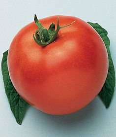 Grow robust tomato plants with Burpee's high yield tomato seeds today. Shop quality beefsteak, cherry, slicing, paste, and heirloom tomato seeds for sale. Find over 100 types of tomato seeds & plants for sale at Burpee. Types Of Tomatoes, Growing Tomatoes In Containers, Heirloom Tomato Seeds, Heirloom Tomatoes, Determinate Tomatoes, Container Gardening Vegetables, Vegetable Gardening, Container Plants, Cucumber Seeds