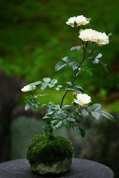 Strategies For Cultivating Bonsai Trees in Marie, Mississippi Garden Terrarium, Bonsai Garden, Garden Plants, House Plants, Ikebana, Bonsai Art, Bonsai Plants, Mini Plants, Indoor Plants