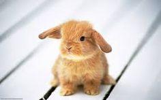 """Képtalálat a következőre: """"boldog húsvétot"""""""