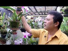 Orquídeas, quando pode dividir a muda - YouTube