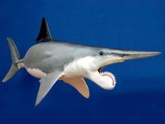 12 animais com dentes horripilantes