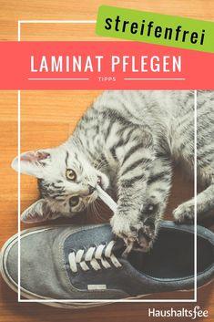 Laminat streifenfrei pflegen – so geht´s... Cats, Tricks, Animals, Water Purification, Gatos, Animales, Kitty Cats, Animaux, Animal Memes