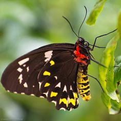 Butterfly Magic, Tucson Botanical Gardens